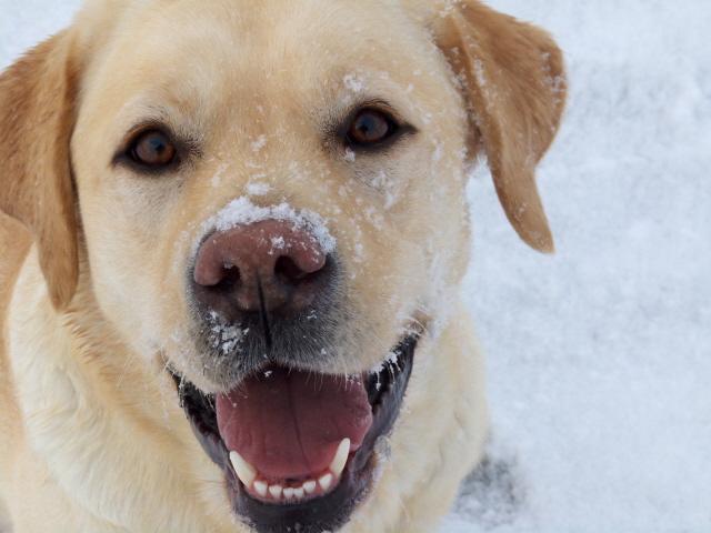 Lina im Schnee